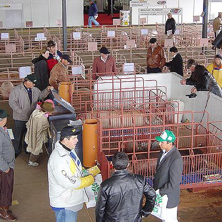 Pavilhão de suínos, Expointer 2005, Expointer 2005