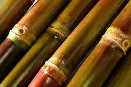Conab revisa para cima produção de açúcar no País