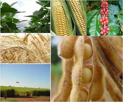 Safra de grãos 2011/12 registra queda de 5% na América do Sul