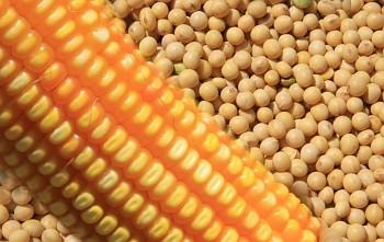 Commodities agropecuárias ficam 10,4% mais caras