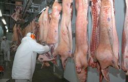 Curso vai capacitar fiscais agropecuários para abate humanitário