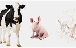 World Animal Protection leva bem-estar animal à FIPPPA 2015