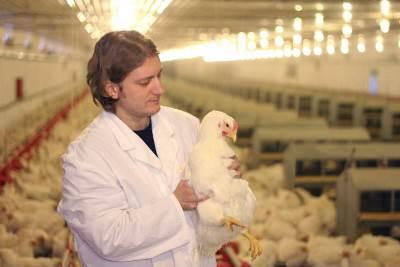 Alerta à avicultura, vem dos produtores integrados do noroeste do PR. As contas não fecham