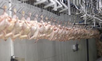 Exportações de frango na 2ª semana do mês avançam menos