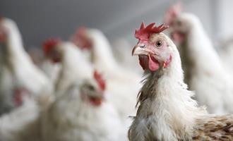 Azerbaijão suspende importação de carne de aves da Polônia