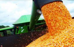 Produção nacional de milho aumenta 4,4% em março