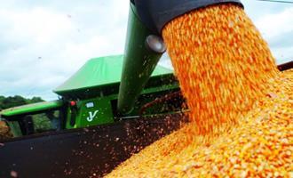 Colheita avança, mas preços do milho voltam a subir