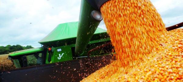 Preço do milho sobe quase 10% em setembro