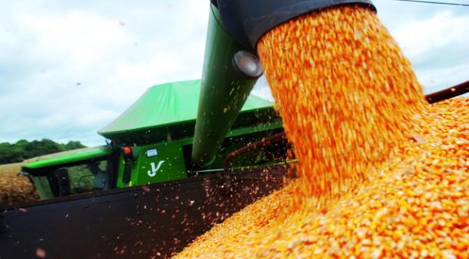 Rota do milho: solução a caminho - por José Zeferino Pedrozo