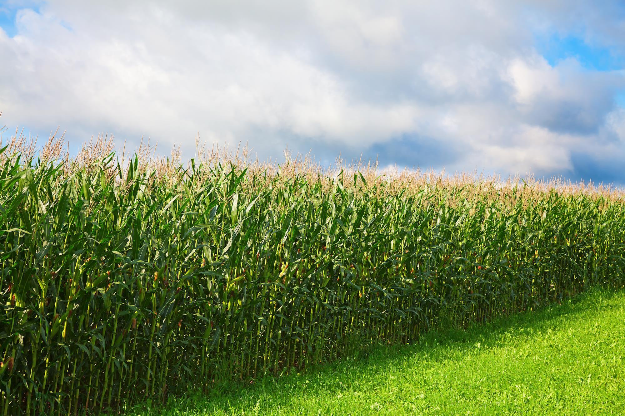 Com investimento de R$ 1 bilhão, MT terá nova usina de etanol de milho