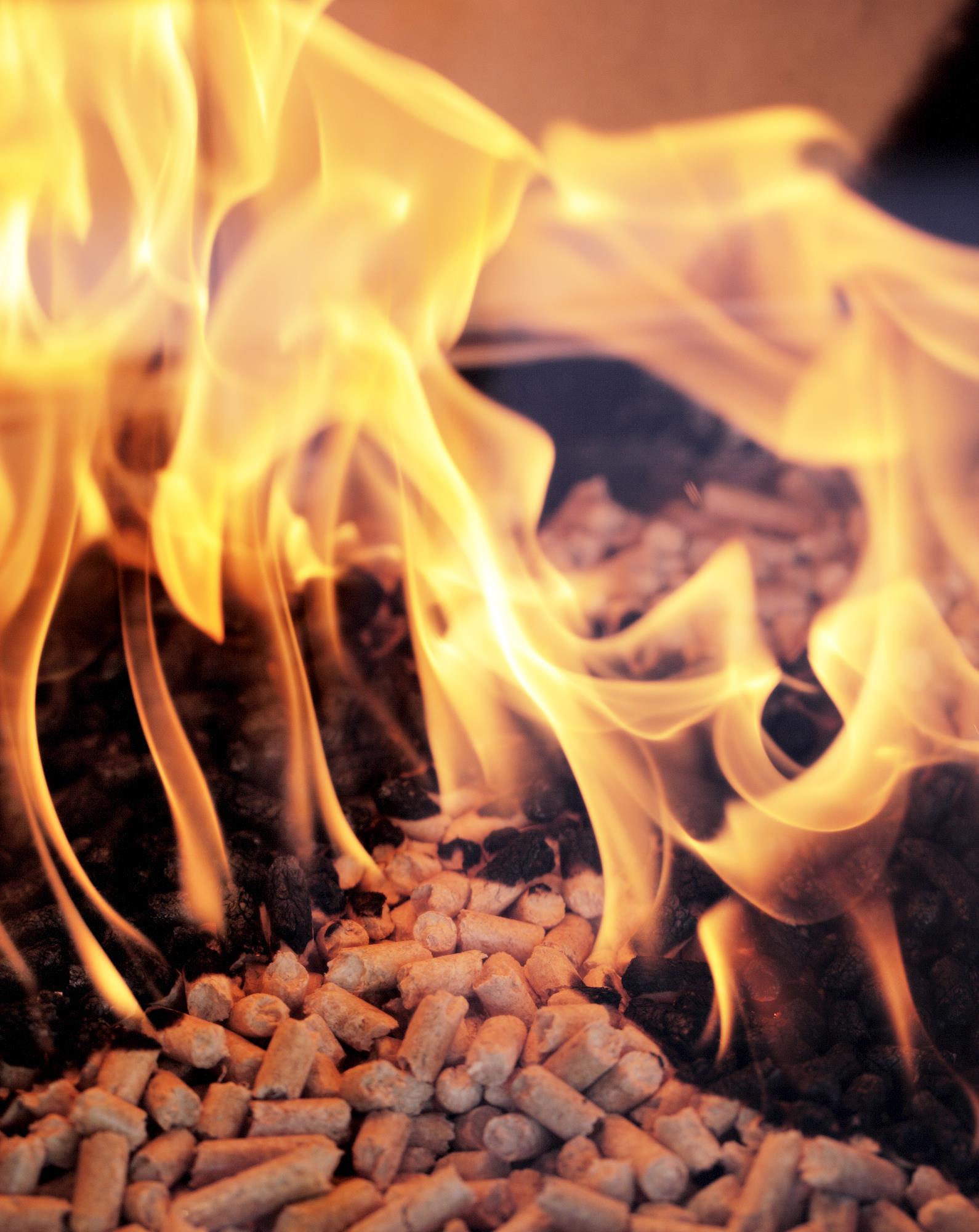Paraná quer investir em biomassa para ampliar oferta de energia