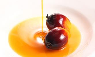 Segundo Adido do USDA, Bélgica quer proibir biocombustíveis feitos com óleo de soja e de palma