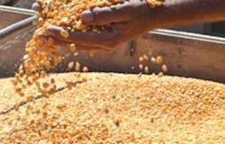Ciep autoriza a comercialização de milho em grãos no Programa de Vendas em Balcão