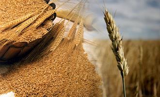 Sistema cooperativista adere ao projeto para incentivar o cultivo de cereais de inverno em SC