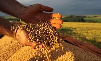 Produtores de aves e suínos  se declaram em situação de emergência devido à alta no preço do farelo de soja