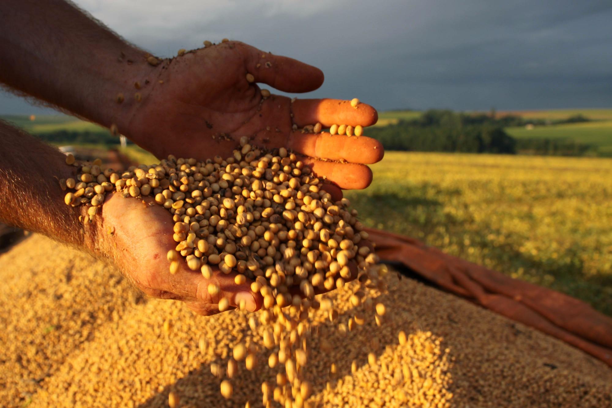 Preços da soja estão pressionados no mercado interno