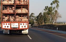 Diário Oficial da União publica novas regras para o transporte de animais