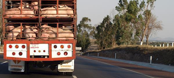 Paralisação de caminhoneiros já perdeu legitimidade, diz ABCS