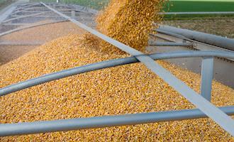 Agroindústria catarinense empenhada na solução para escassez de milho
