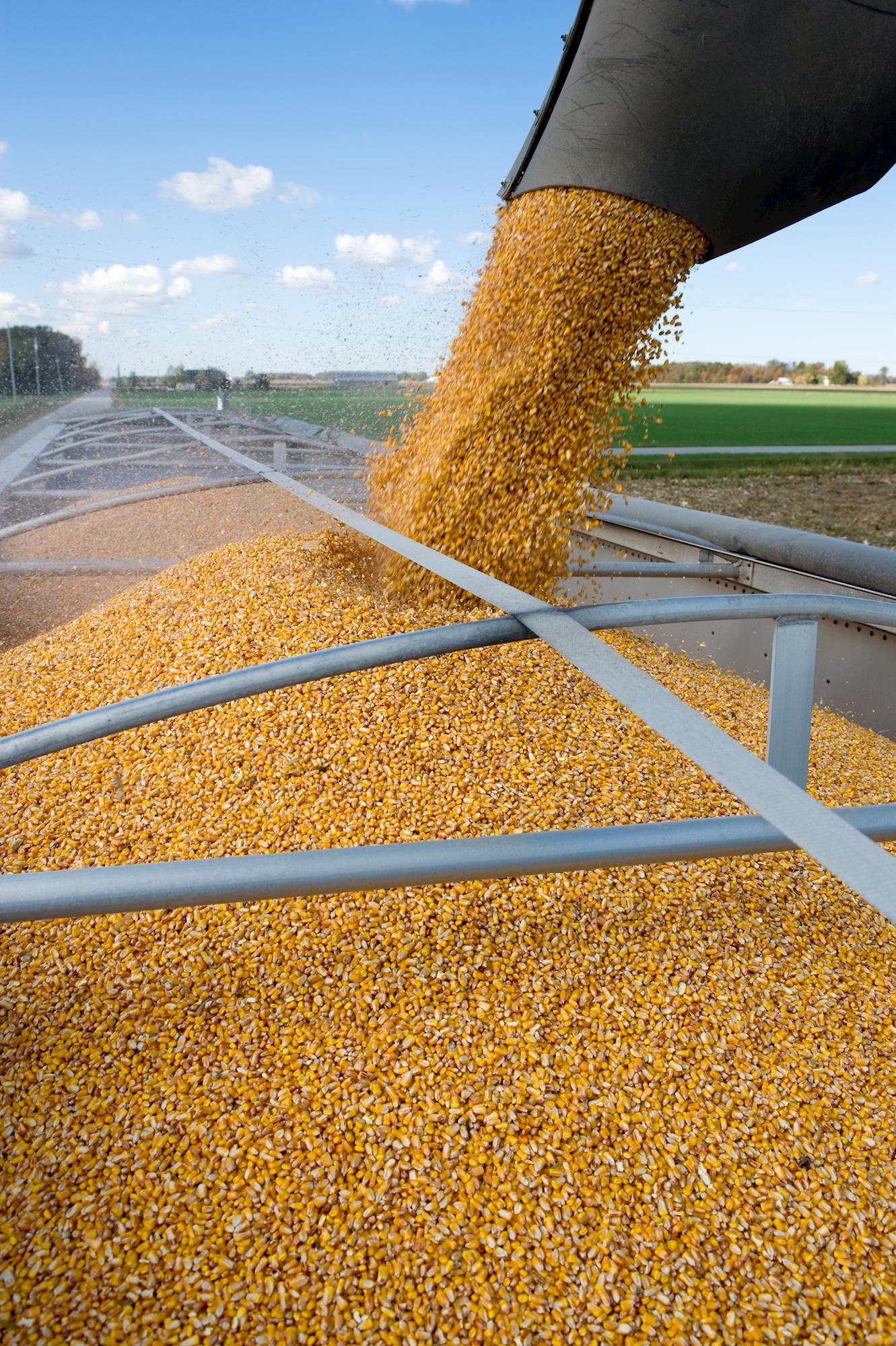 Produção de grãos deve alcançar 235,3 milhões de toneladas