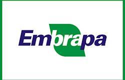 Aberta seleção para novo presidente da Embrapa