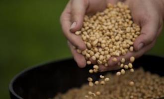 Desvalorização do dólar enfraquece preços da soja no Brasil