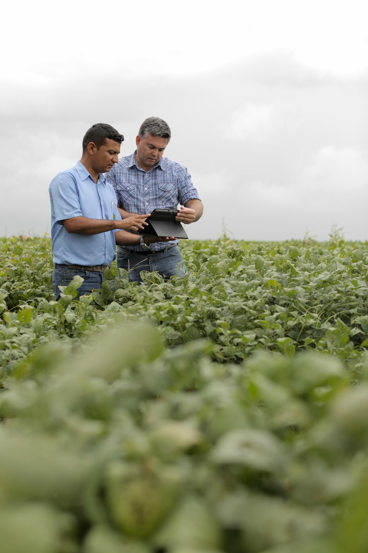 8424c3da0a9 Agricultura conectada  startups apostam no campo