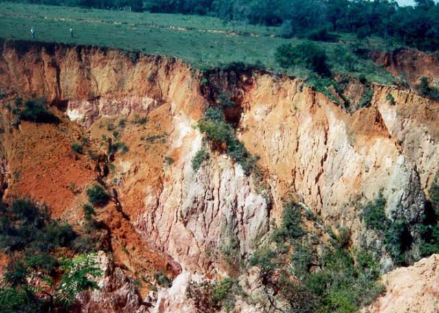 A ameaça da degradação dos solos - por Ricardo E. Rose
