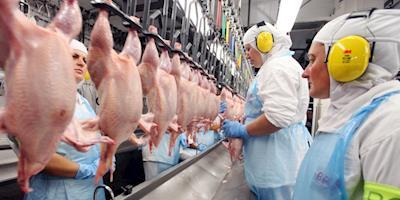Produtora de carne de frango São Salvador Alimentos protocola pedido de IPO