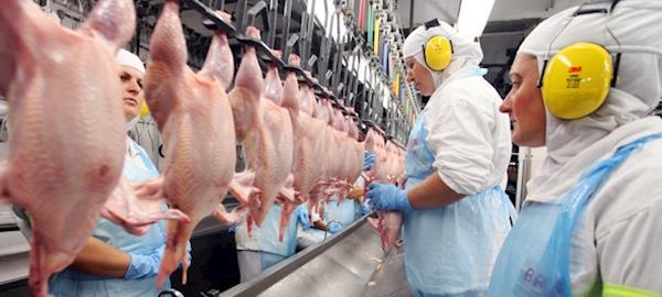 Abate de frangos registrou queda no 4º trimestre de 2018