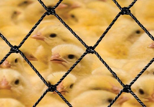 Equiplex apresenta opções de redes de proteção para aviários
