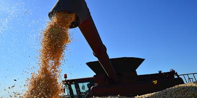 Indicador do milho supera os R$100/SC
