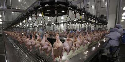 Câmara Uruguaia de Aves busca aumentar a produção, o consumo e a exportação de aves