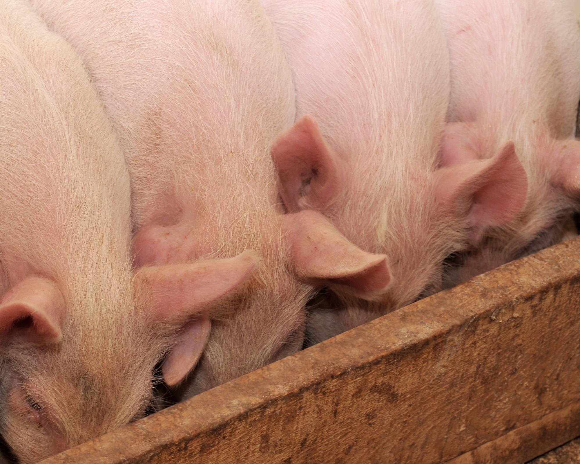 Carne ambientalmente sustentável - Por Coriolano Xavier