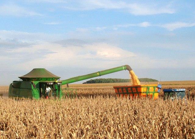 Milho impulsiona estimativas da safra nacional de cereais 2019, diz IBGE