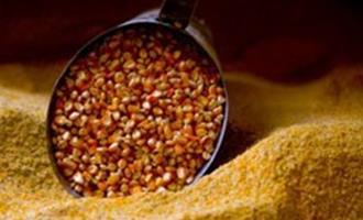 Preços do milho apresentam movimentos distintos dentre as regiões
