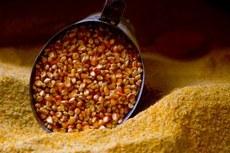 Cotações do milho voltam a recuar neste início de mês