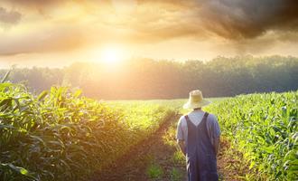 Emissões da agropecuária do Brasil correspondem a 0,83% da mundial