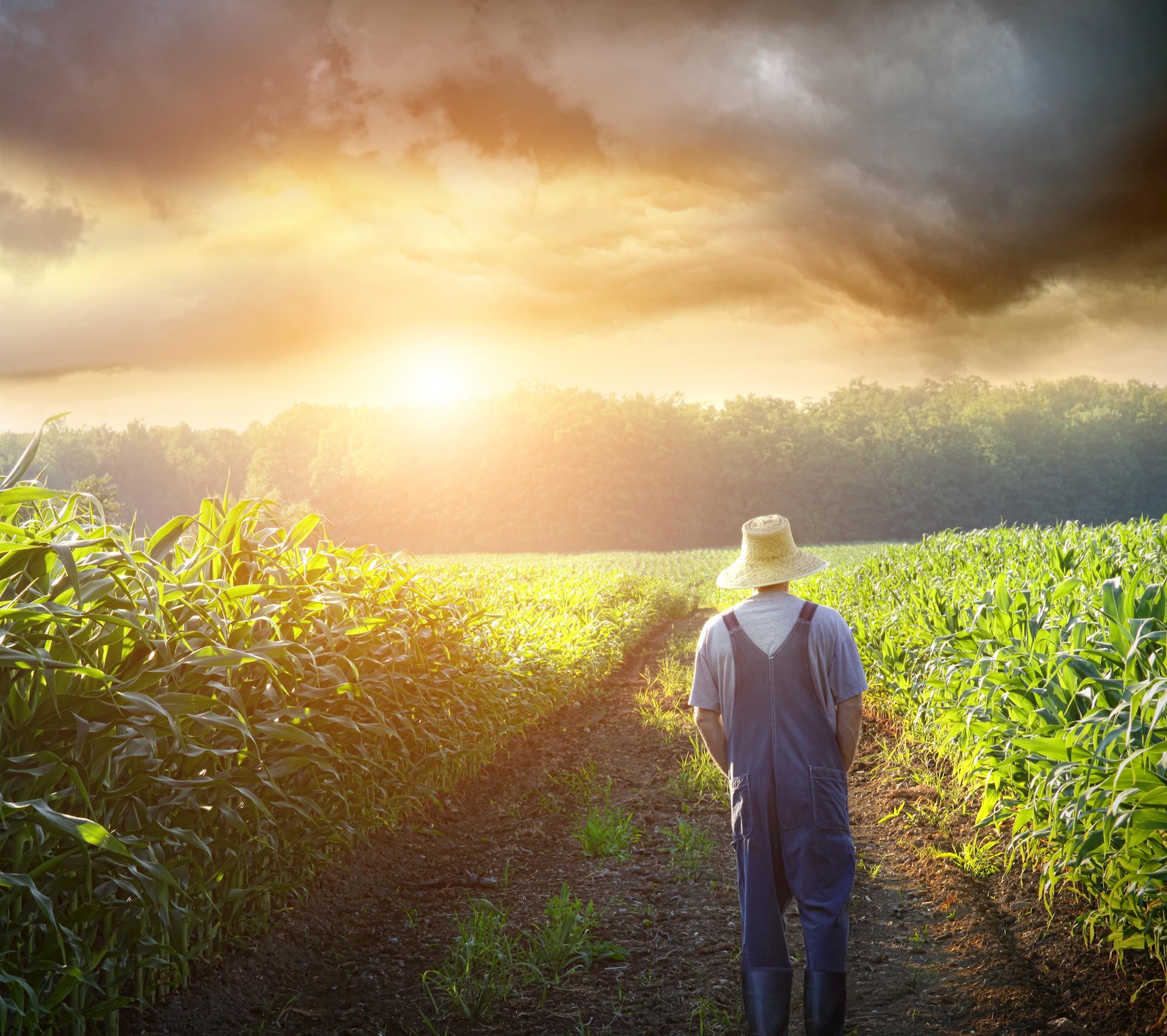 Projeto Rural Sustentável destinará US$ 40 milhões para pequenos e médios produtores