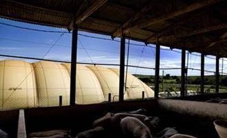 Indústria argentina inaugura usina bioelétrica alimentada com dejetos de suínos e frangos