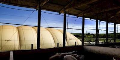 Geração de biogás através de dejeto de suínos, tema apresentado no Webinar sobre Biogás