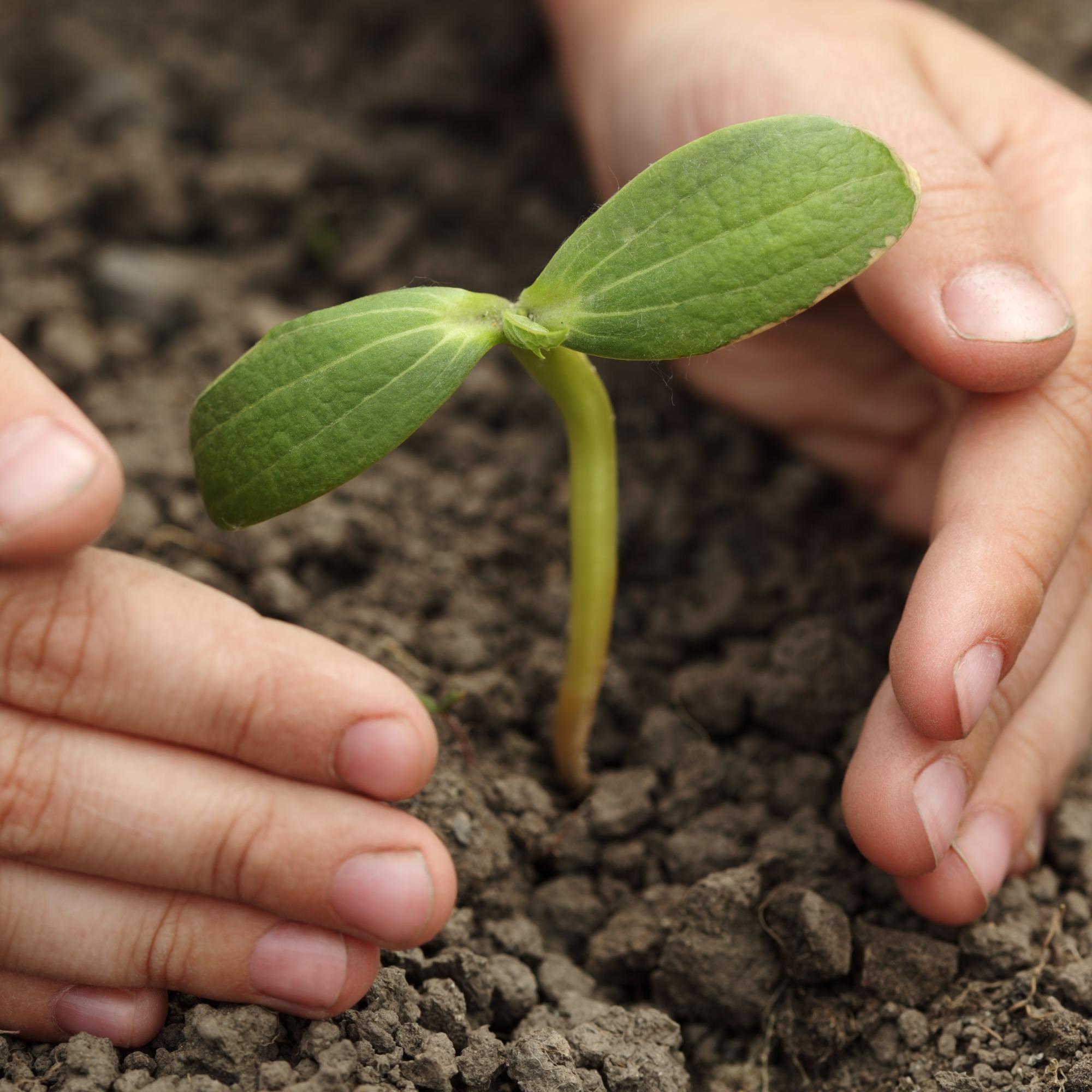 CNA participará de encontro do fórum econômico mundial sobre sustentabilidade