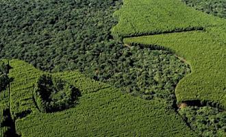 Governo de São Paulo lança programa para recuperação de vegetação nativa