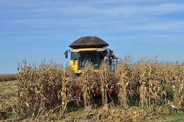 Produção de milho 2018/19 pode atingir novo recorde