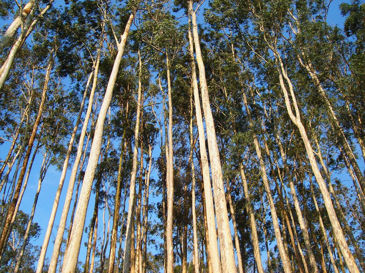 Andritz fornecerá sistema de manuseio de biomassa para usina no Mato Grosso do Sul