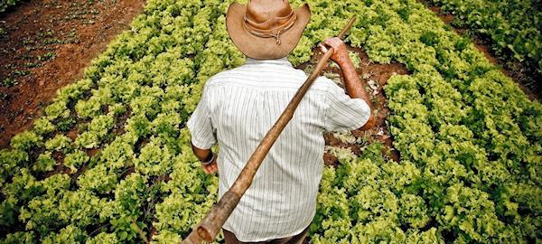 Estratégia para redução de gases de efeito estufa na agropecuária são iniciadas
