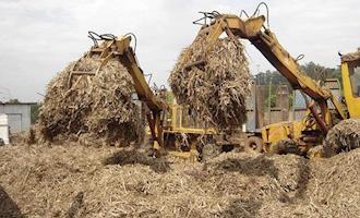 Projeto brasileiro de energia a biomassa é candidato a prêmio internacional