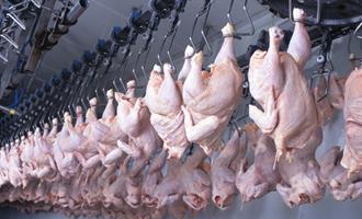 Brasil exporta mesma quantidade de frango, mas receitas caem 13%