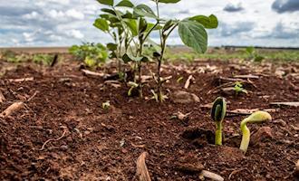 Mapa reage a comentário de presidente francês sobre a soja brasileira
