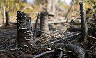 Consumidor vê preservação ambiental como prioridade maior que o PIB, diz pesquisa